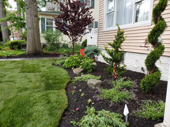 a beautifully designed garden and sodded lawn in Ridgefield NJ